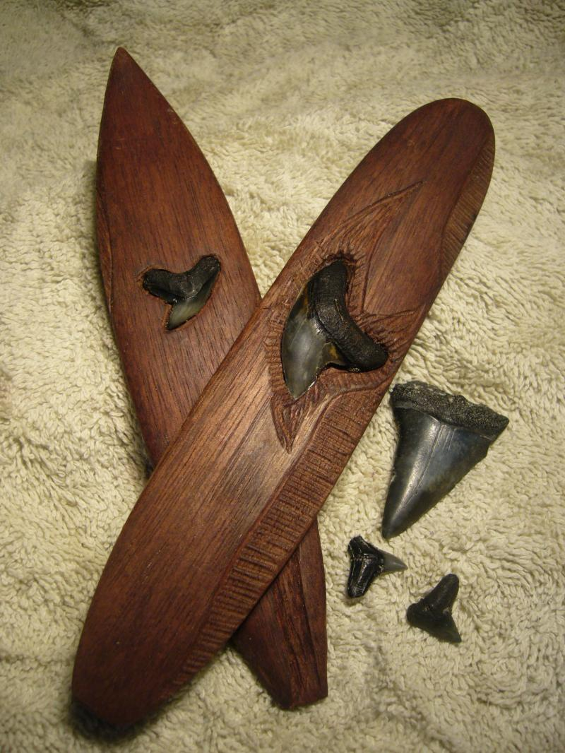 shark tooth surf boards